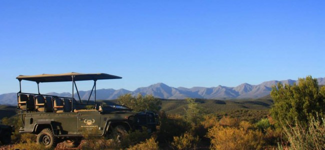 Game Drive at Buffelsdrift Game Lodge, Oudtshoorn, South Africa