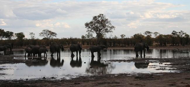 Elephants spotted on a Game Drive, Hwange National Park, Zimbabwe