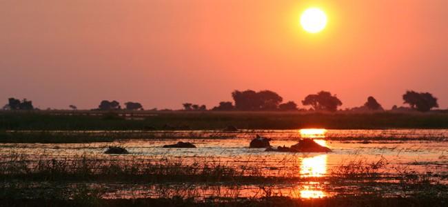 Hippos spotted on a Sunset Cruize on the Zambezi River, Zambia