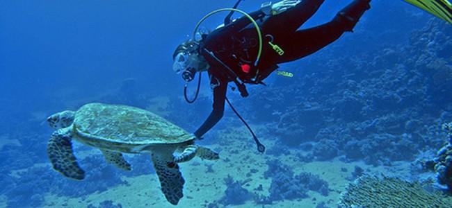 Scuba diving at Inhambane, Barra Beach Resort, Mozambique