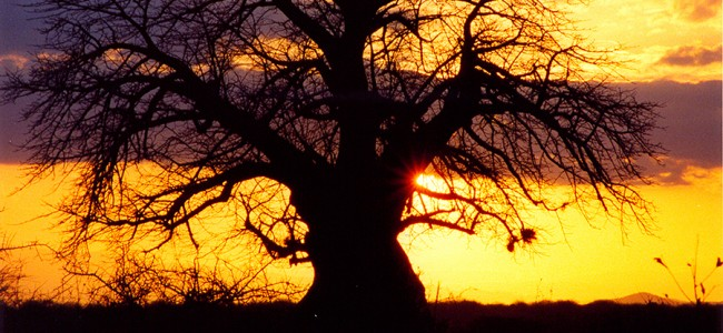 Sunset in the Tsavo National Park, Kenya