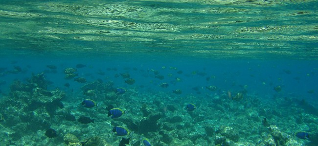 Under shallow water in the maldives